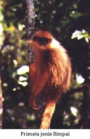 Taman Nasional Kerinci Seblat